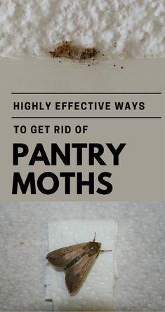 19 best pantry moths images cleaning hacks getting rid of moths rh pinterest com