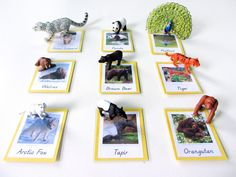 Animals of Asia for the Montessori Wall Map  Quietbook with Free Printables