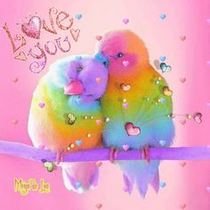 Beautiful Love Pictures, Beautiful Gif, Beautiful Birds, Love You Gif, Love You Images, Colorful Animals, Colorful Birds, Cute Birds, Pretty Birds