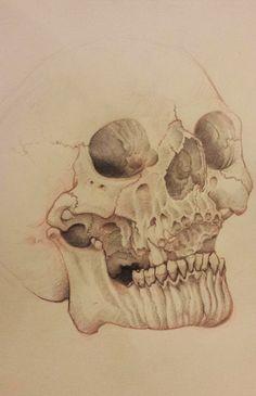crâne realiste