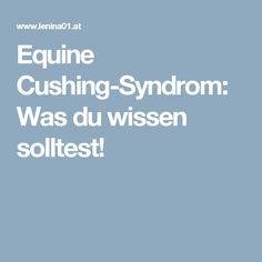 Equine Cushing-Syndrom: Was du wissen solltest!