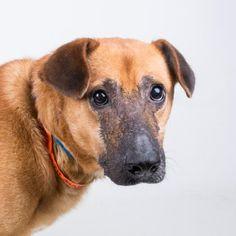 GA. Brad Pitt. Shepherd/Mixed. Gets along with other dogs, loves walks. Pet ID: 31416830. Neutered.