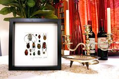Artframe with real insects : Topquality display with beautiful mosaic beetles FREE SHIPPING by Alanscollectibles on Etsy