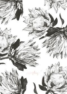 Pretty Protea - Table Seating | Paperplay Protea Art, Protea Flower, Black Tattoos, Body Art Tattoos, Husky Tattoo, Beauty Products Labels, Tattoo Floral, Wood Burning Art, Hennas