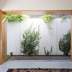 Letting the outside in with this terrace house in Bondi by Fearns Studio  The fibre cement sheets used to clad the outside partitioning wall look great, especially with the manicured vine growing on it. An inexpensive solution with a big payoff  #australianarchitecture #architecture