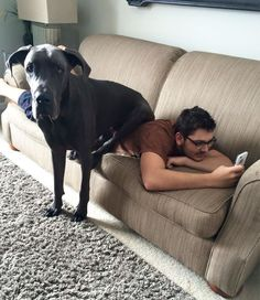 20+ Dogs Who Don�t Understand How BIG They Are
