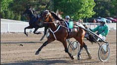 Spade Ace Frido jahtaa jo peräti kuudetta perättäistä voittoaan. Copyright: Risto Silvola. Kuva: Risto Silvola.