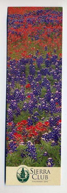 Sierra Club wildflowers