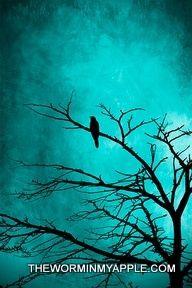 Love silouettes. Espcially birds
