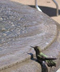 Provide Water for Hummingbirds: A regular bird bath is too big for hummingbirds.