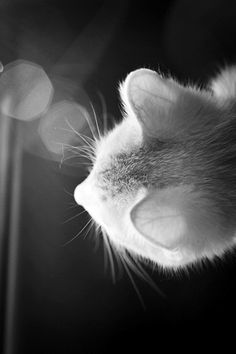 """""""The cat has a nervous ear that turns this way and that.  And what the cat may hear is known but to the cat."""" --David Morton"""