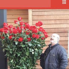 FLOWERS PAPADAKIS Est 1989 –  Trade Fair Flowers Holland 2016  Dimitris Papadakis
