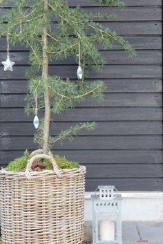 Skandinavisk jul – den vackraste julen är naturligt grön (och vit) - Sköna hem