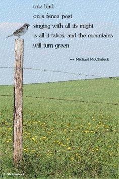 Tanka poem: one bird --by Michael McClintock.