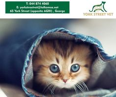Cats are very inquisitive creatures by nature which makes it easier for them to contract strange illnesses. Visit the Vet Shop and have your feline vaccinated this December for only R199.00 and be sure to get the maximum protection your bundle of fur. #cats #ilovemypet #vetshop