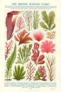 The british seaweed family print