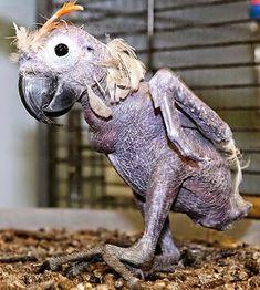 Dieren zijn zonder vacht nauwelijks herkenbaar.