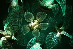 Les plantes lampes de Mariana Folberg  2Tout2Rien