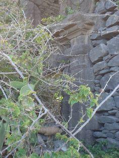 File:Solar do Agrela, Caniço de Baixo, Madeira - 1 Aug 2012 - DSC03463.JPG