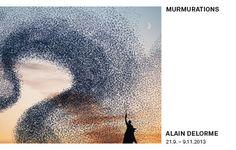 (Deutsch) Murmurations - Taubert contemporary