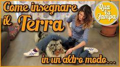 Addestramento/Educazione cani n°12: Come insegnare il TERRA...in un altr...