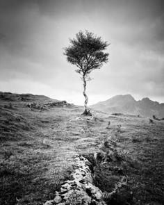 Interview with fine art photographers Gerald Berghammer & Ina Forstinger Photography For Sale, Tree Photography, White Photography, Fine Art Photography, Landscape Photography, Photography Magazine, Panorama Camera, Black And White Landscape, Berg