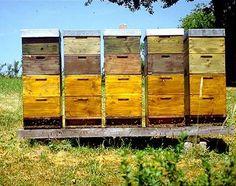 Hives.