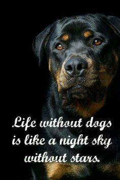 Life without dogs would be like a night sky without stars. More