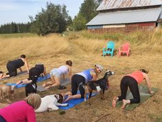 Our Friends At Goat Yoga Now Have Their Own Beer! - http://modernfarmer.com/2017/03/friends-goat-yoga-now-beer/?utm_source=PN&utm_medium=Pinterest&utm_campaign=SNAP%2Bfrom%2BModern+Farmer