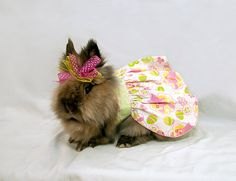 This rabbit is wearing a dress... nuff said