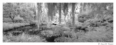"""""""Everyone discusses my art and pretends to understand, as if it were necessary to understand, when it is simply necessary to love.""""  - Claude Monet    I have wonderful memories of Monet's famous lily pond having spent many hours there. Several years ago, I shot this pano in IR to emphasize the lushness of forms (plenty of time to play with the color later).  From Dewitt Jones at http://www.Facebook.com/dewittjonesfanpage - all images Creative Commons non commercial"""