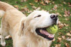 Usted puede enseñar a un viejo perro nuevos trucos ¿Qué es eso que dicen de los perritos viejos, cómo no se les puede enseñar nuevos trucos? Una cantidad creciente de personas ha afirmado que el dicho es falso, con ejemplos de su propia experiencia que contradicen la opinión popular. Tienen …