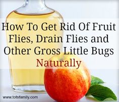 How To Get Rid Of Fruit Flies, Drain Flies and Other Gross Little Bugs - Naturally - Thinking Outside The Sandbox Family DIY, Recipes, Autism, Kids Household Cleaning Tips, House Cleaning Tips, Cleaning Hacks, Home Remedies, Natural Remedies, Insecticide, Fruit Flies, Natural Cleaners, Natural Cleaning Products