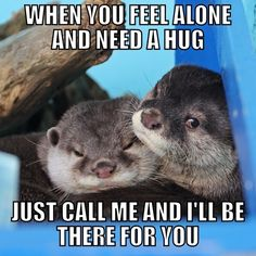 Well, I otter. Baby Animals, Funny Animals, Cute Animals, Baby Otters, Baby Sloth, Otter Love, Baby Puppies, Spirit Animal, Snuggles