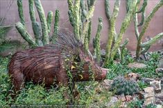 Succulents and More: Potted perfection at the Arizona-Sonora Desert Museum Sonora Desert, Stucco Exterior, Arizona Travel, Water Wise, Flowering Shrubs, Baja California, Ficus, Backdrops, Desert Gardening