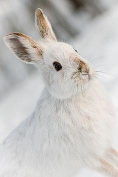 First of the year, Bunnies-Bunnies!  Gotcha!  Better Luck Next Month❤️