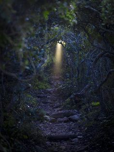 "faery path ... Imagine a story. Tell mow what's going to happen ... ""The FaerieKind: Fire & Ice"" a real faerie novel you'll really love!!"