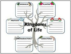 Printables 6 Kingdoms Worksheet 6 kingdoms of life descriptions classroom science pinterest with this foldable students will have a quick guide to how organisms are classified into who developed the method nami