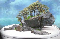 ~ Bonsai ~ Saikei = ( mini forest ) ~