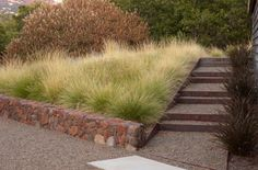 A gorgeous way to soften a landscape with grasses. Geyserville Residence. Geyserville, CA.
