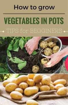 Learn how to grow vegetables in pots. Tips for beginners.