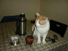 gato matero! Argentine cat. Even the animals love a good mate!!!