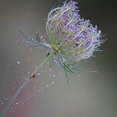 ♡ bon dia!!! #rsa_ladies  #jj_indetail #vzcomacro#minimalism_world #global_ladies#naturehippys#natureromantix#pocket_minimal#Pocket_Family#clikcat#click_vision#flowers#nature_brilliance#vsco#rsa_vsci#tv_depthoffield#transfer_visions#nothingisordinary_#global_nature#tv_simplicity#moodforfloral#flowersandmacro#rsa_fpog_sp#P9naturaleza#inthemoodfor_macro#transfer_visions#duskmac