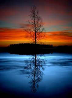 Silhouette of tree reflection in the lake at dusk.