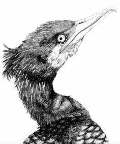 #cormorant #illustration #sketch #pencil #graphite // #kormoran #zeichnung #bleistift #graphit