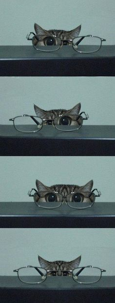 kitty  glasses- funny because I can remember the cats eye frames.