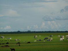 Llanos Venezolanos.
