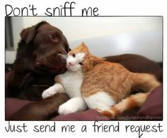 Best friends Hessel and Hannes.