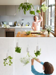 These hanging pots from Boskke have literally turned gardening upside down. I like the idea of growing herbs in the kitchen where the. Hanging Plants Outdoor, Indoor Plant Pots, Hanging Planters, Diy Hanging, Upside Down Plants, Inside Plants, Hydroponic Gardening, Gardening Tips, Indoor Gardening