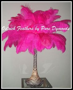 hot pink ostrich feathers, Misc Picture
